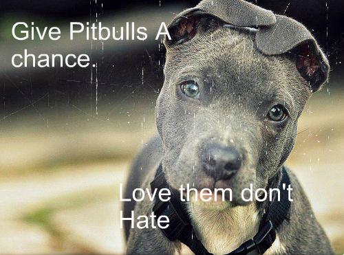 pitbull ピットブル