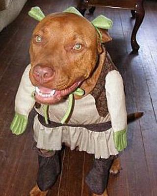 pit-bull-Ogre-costume